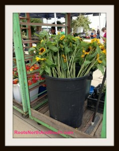 Sunflowers by the barrel