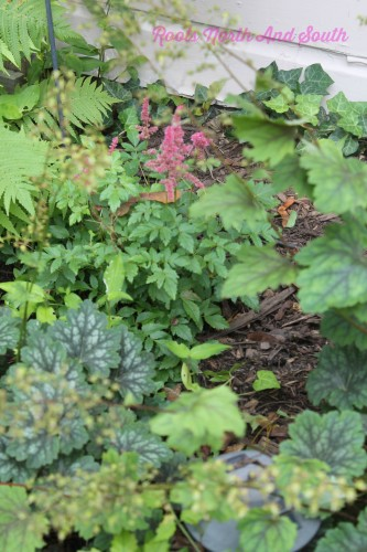 Coral Bells and Astilbe on the Garden Tour