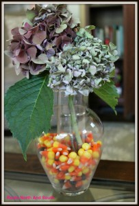 Candy corn and hydrangea floral