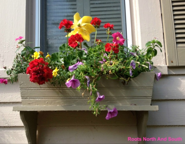 Whimsical Windowboxes on Old house