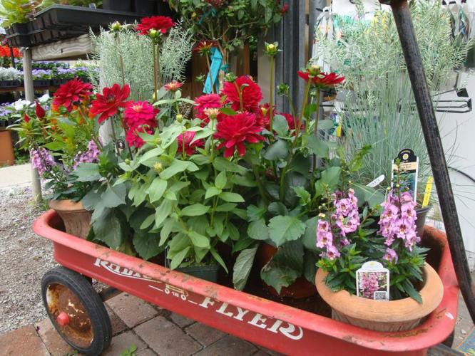 Little Red Wagon Container garden