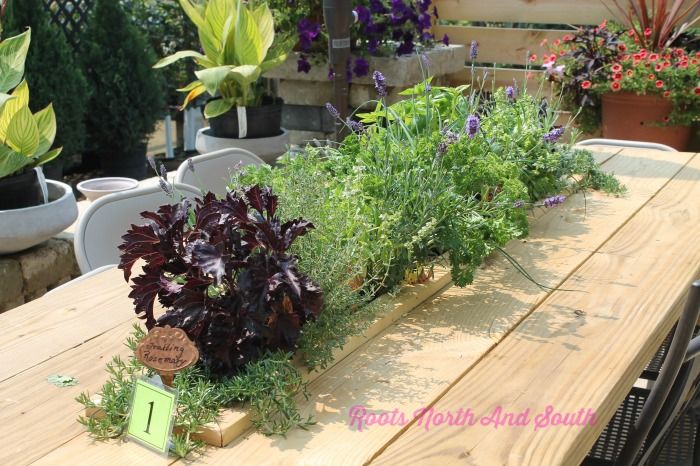 A Table Herb Garden