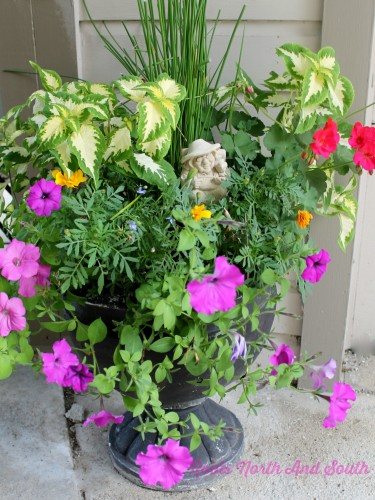 The Secret to Creating Container Gardens