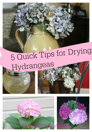 5 tips for drying hydrangeas