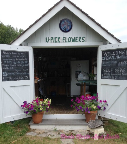 Pick Your Own Flowers on Leelanau Penninsula
