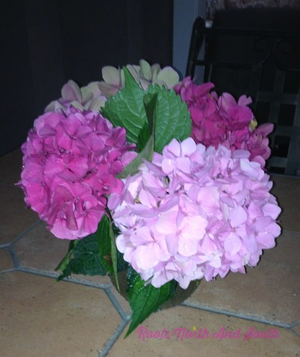 Tips for Drying Hydrangeas