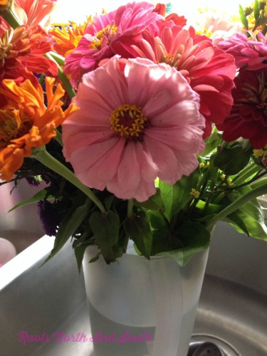 Sink Full of Farmer's Market Zinnias