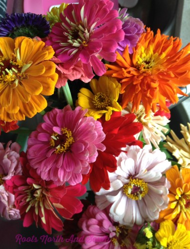Zinnias on a Lifestyle Bloggers Daily Journal