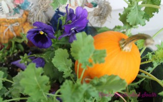 Mums the Word: Tips for Adding Fall Color to the Garden