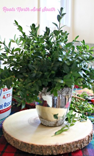 Making a boxwood centerpiece