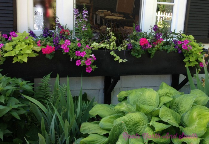 Planting spring bulbs in window boxes