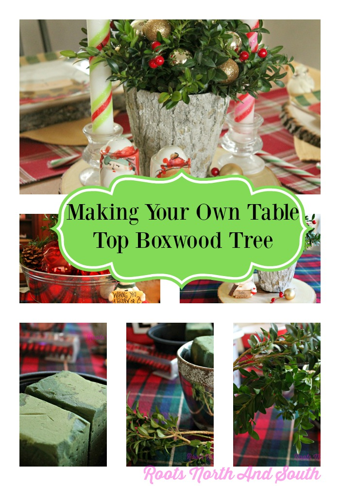 Making boxwood centerpiece trees roots north south