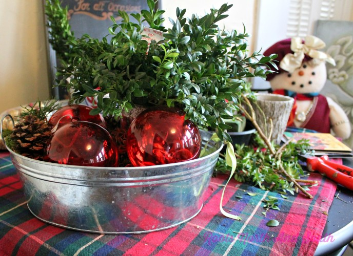 Boxwood for Christmas Tables