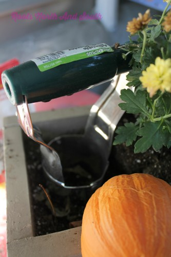 Planting bulbs in window boxes