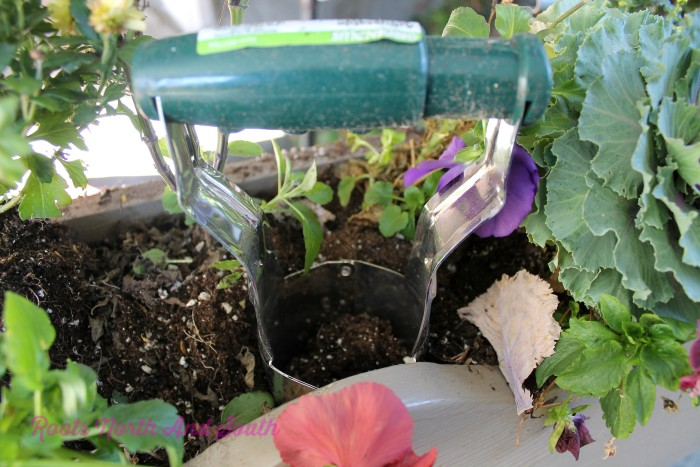 how to plant bulbs in window boxes