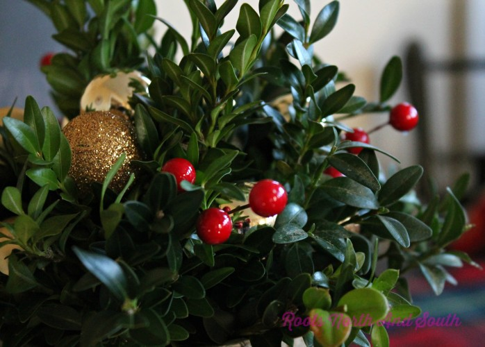 Boxwood for Christmas