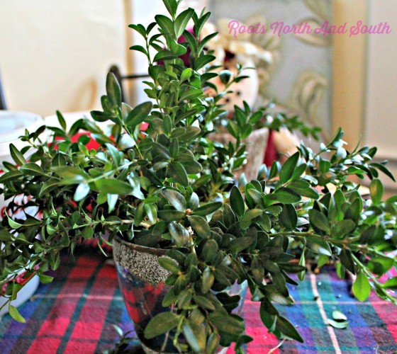 Building a Boxwood Tree Centerpiece