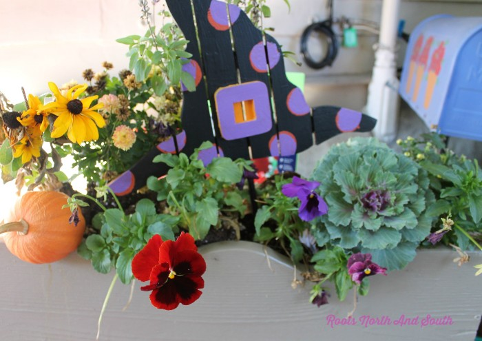 How to plant spring bulbs in window boxes