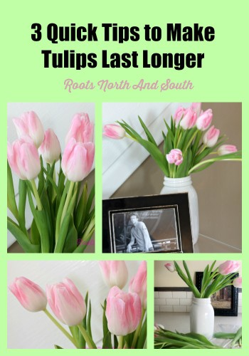 How to keep fresh cut tulips alive longer