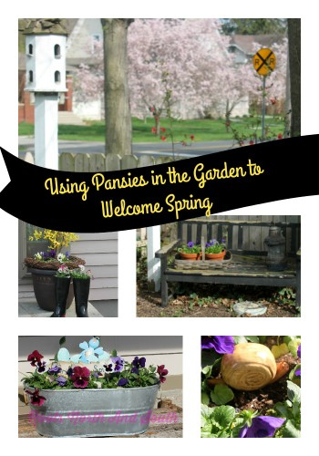 Spring pansies to say welcome