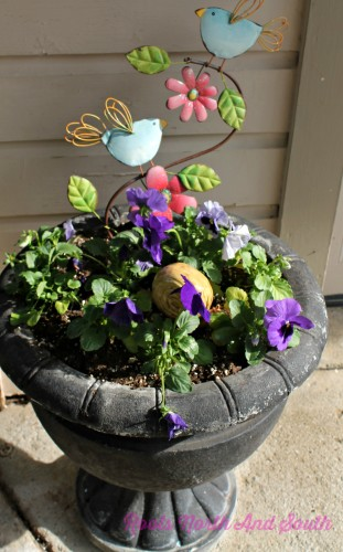 Pansies to welcome spring