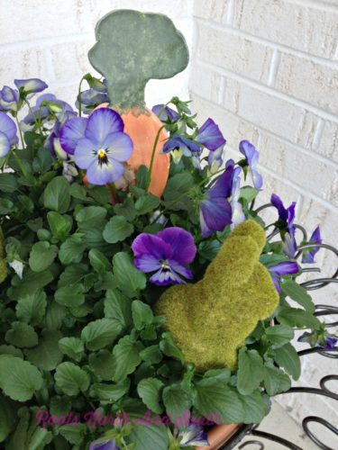 Pansies for Spring
