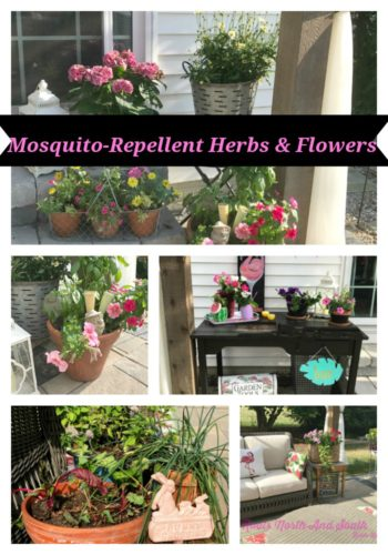 Mosquito-repellent herbs and flowers